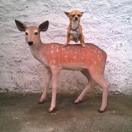 circa su bambi